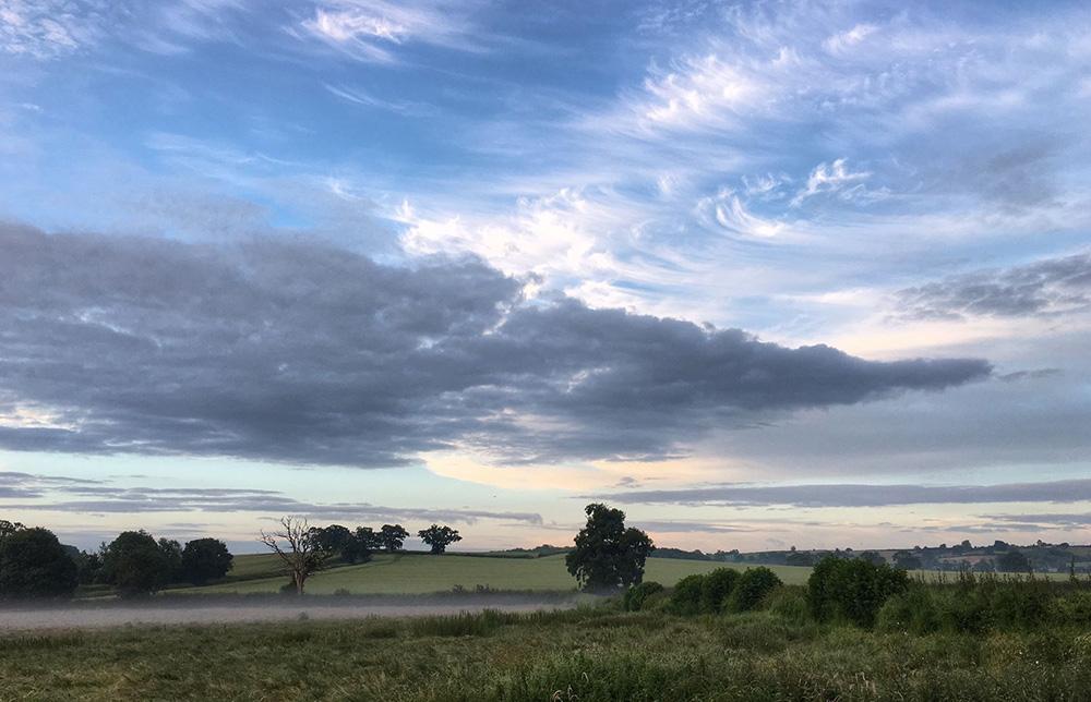 Westfield-hereford